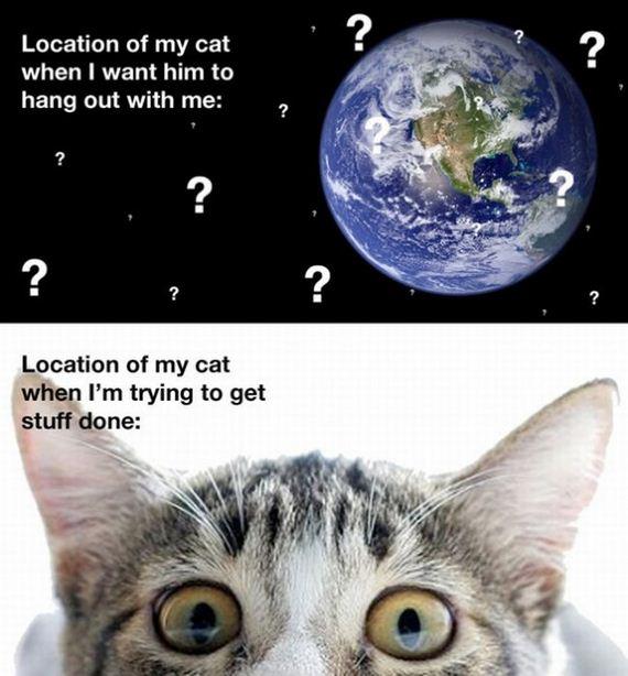 gato acecho