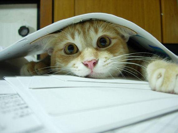 gato-escondido