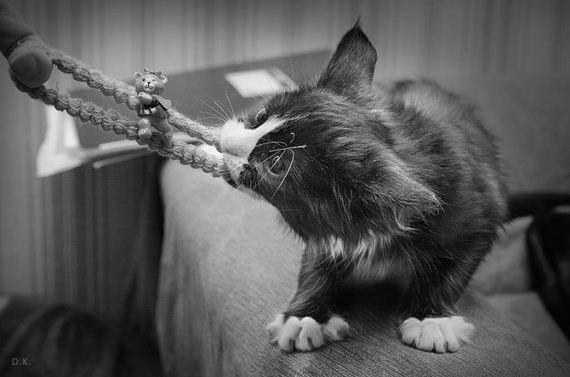gato jugeton