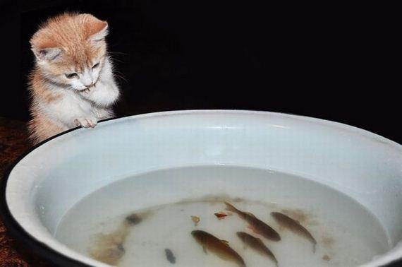 gato pezes