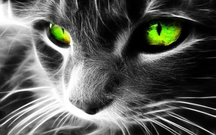 gato-vello