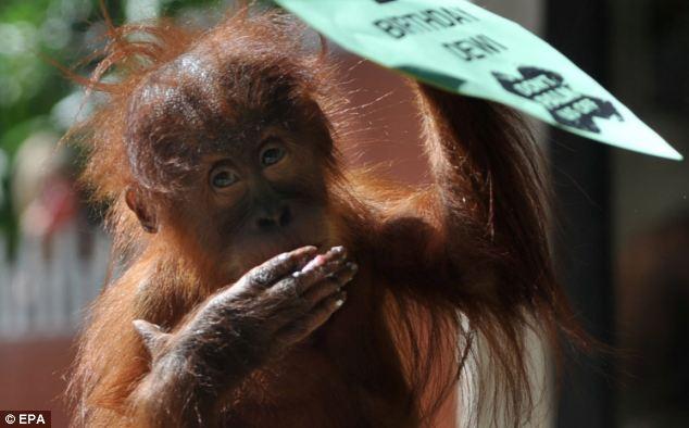 gorila-bebe