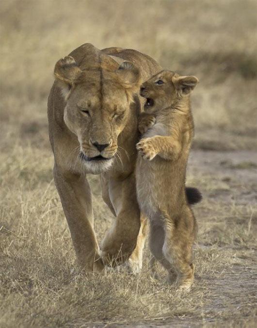 leona cachorro