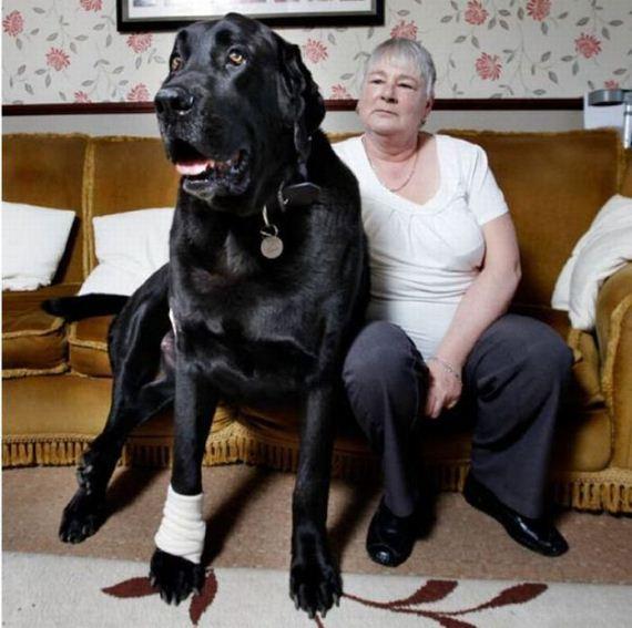 perro grande