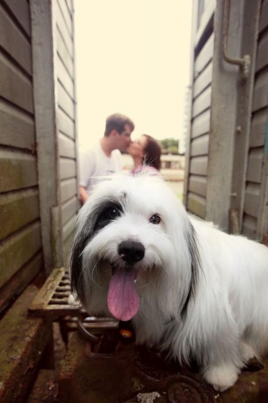 perro-perra