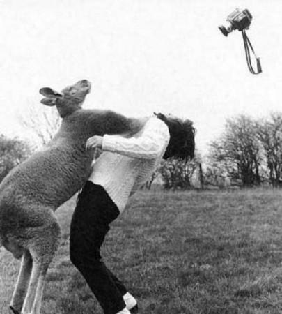 accidentes-animales-humanos-18