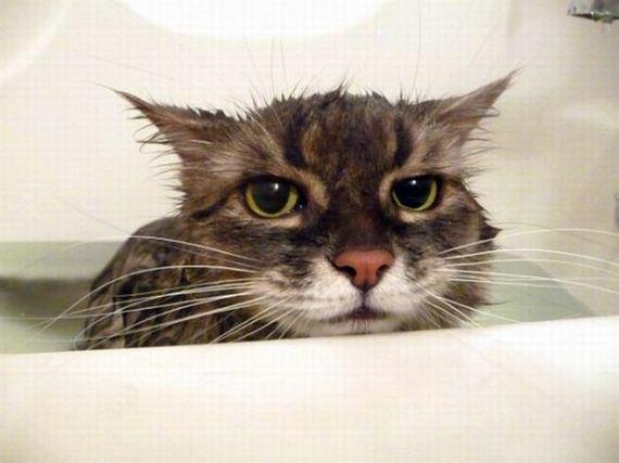 baño-gato-1
