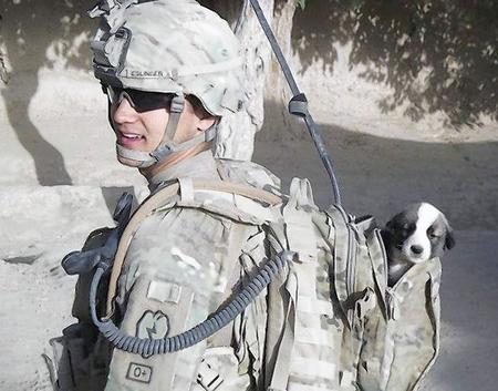 cachorro-adoptado