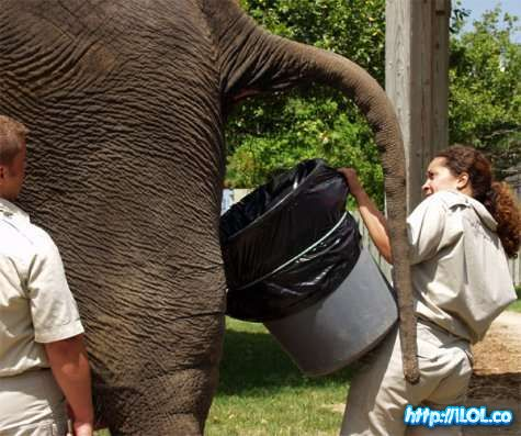 cuidadora-elefantes
