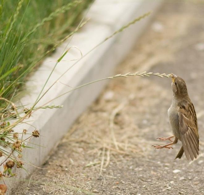 fotos-imagenes-aves-02