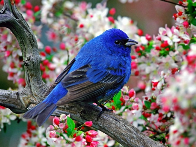 fotos-imagenes-aves-04