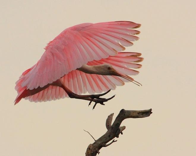 fotos-imagenes-aves-06