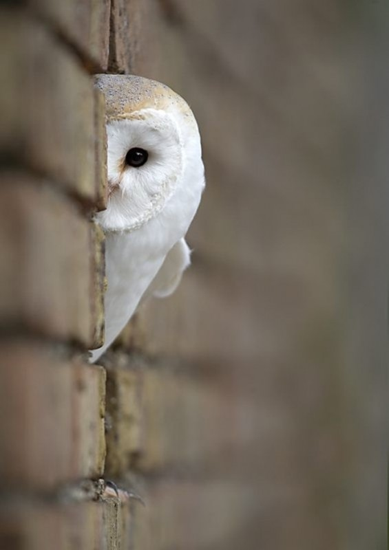 fotos-imagenes-aves-08