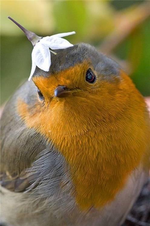 fotos-imagenes-aves-09