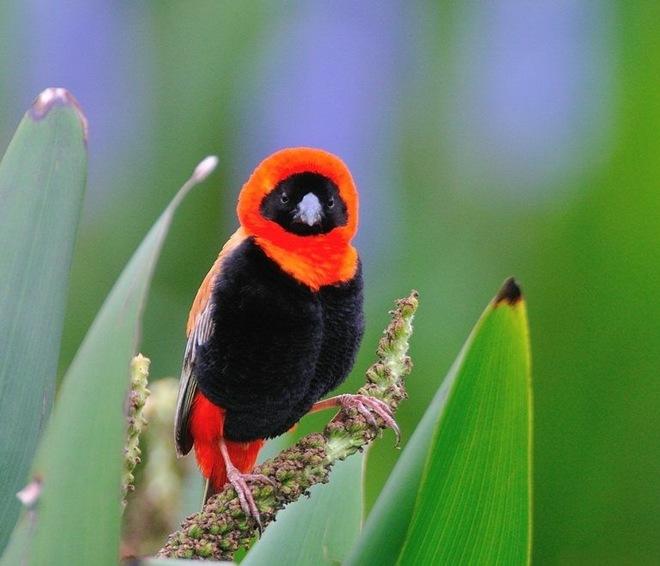 fotos-imagenes-aves-11