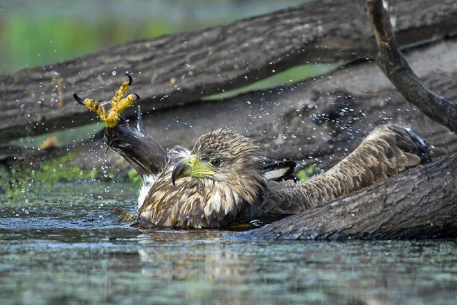 fotos-imagenes-aves-12