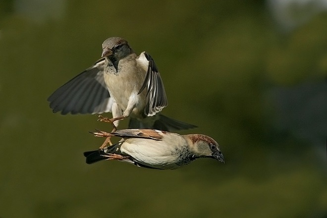 fotos-imagenes-aves-16