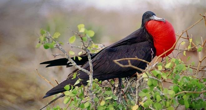 fotos-imagenes-aves-20