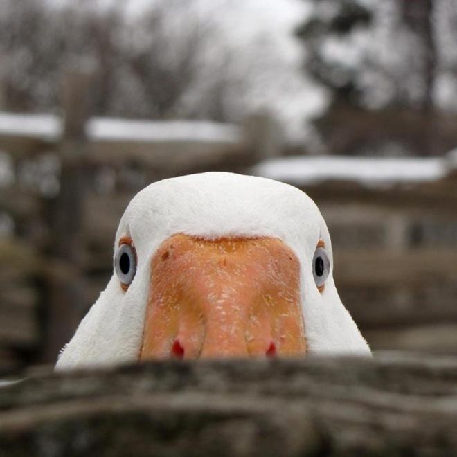 fotos-imagenes-aves-22