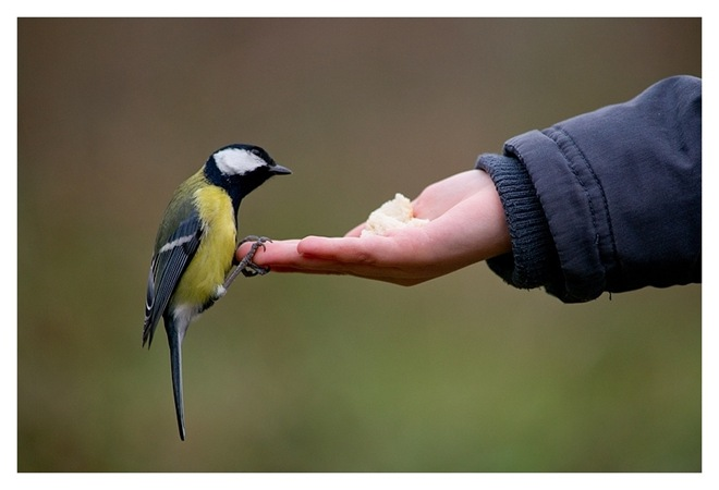 fotos-imagenes-aves-23