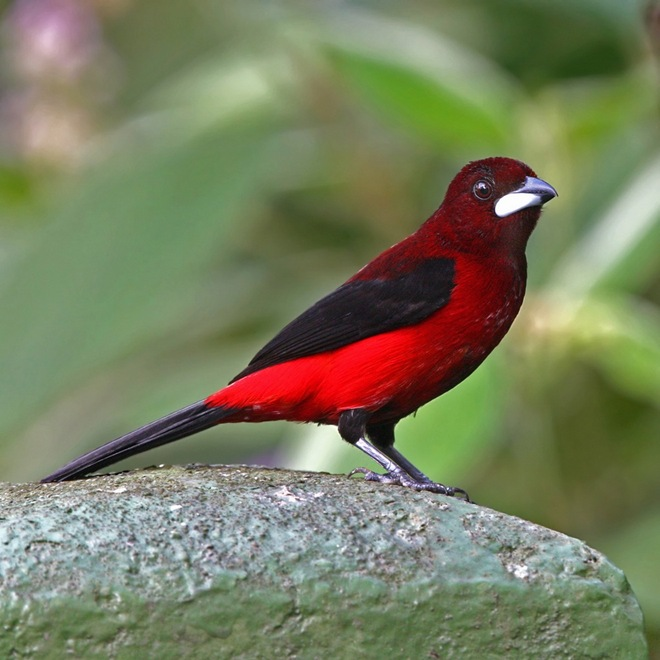 fotos-imagenes-aves-27