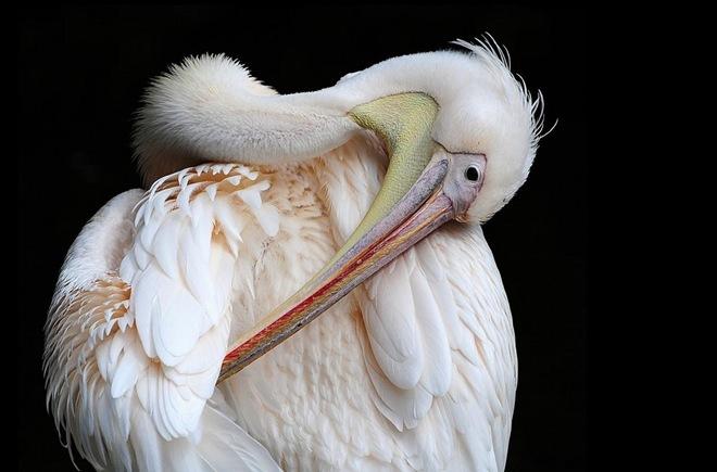 fotos-imagenes-aves-29
