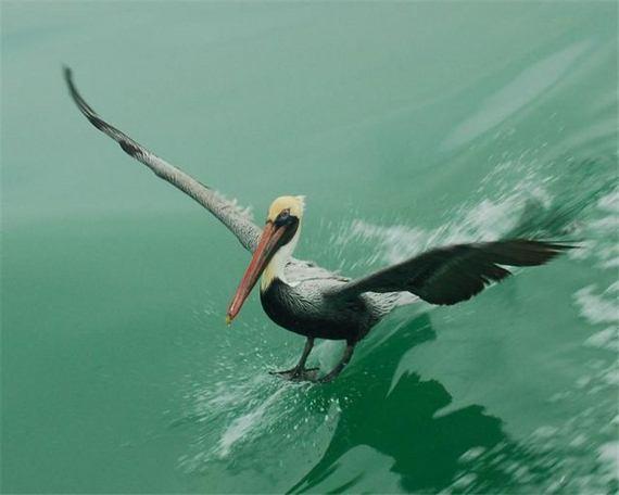 fotos-imagenes-aves-31
