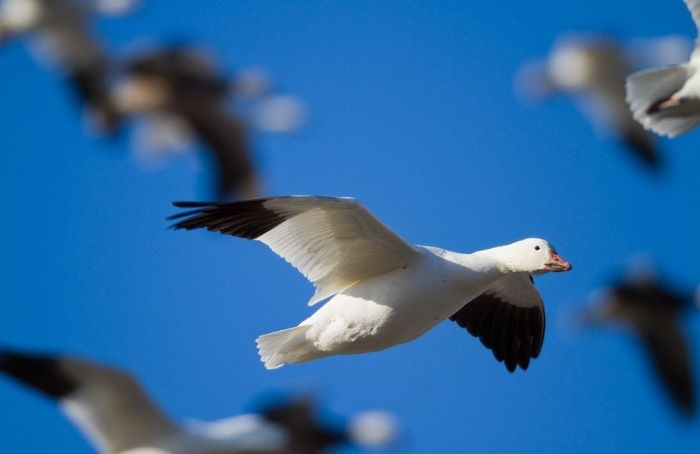 fotos-imagenes-aves-34