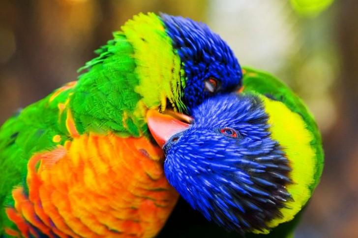 fotos-imagenes-aves-35