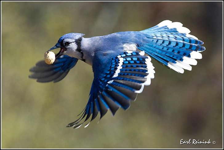 fotos-imagenes-aves-36