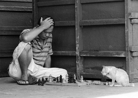 gato-ajedrez