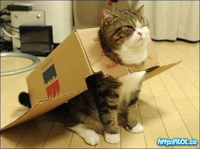 gato-cabreado