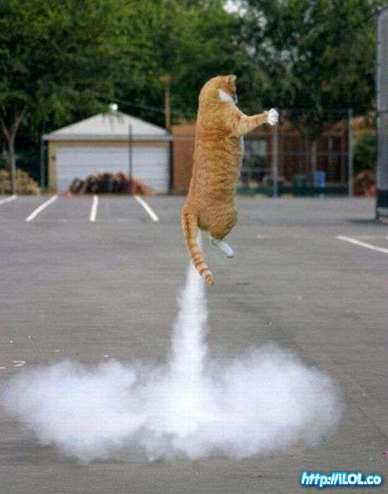 gato-cohete
