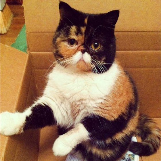 gato-doscaras