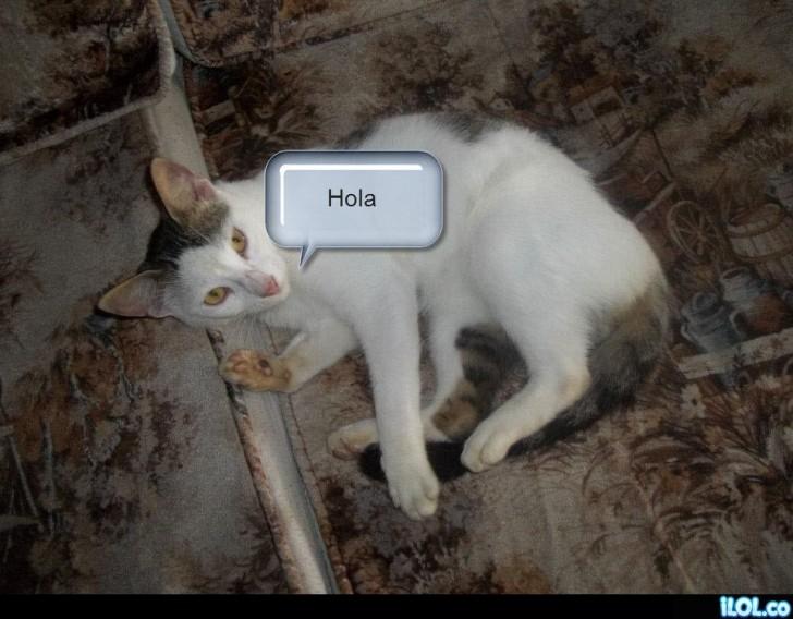 gato-hola