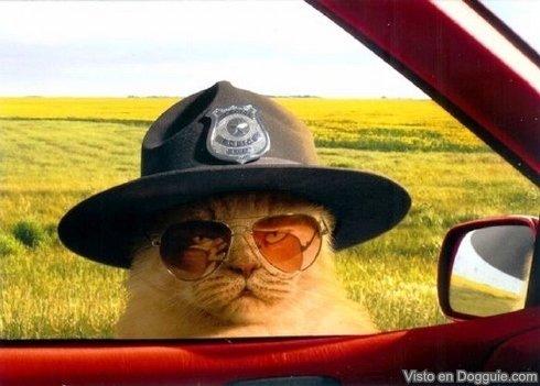 gato-poli