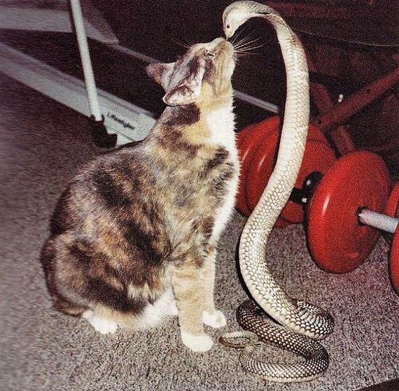 gato-serpiente