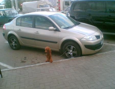 humor-fotos-animales-humanos-08