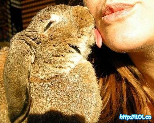 lameton-conejo