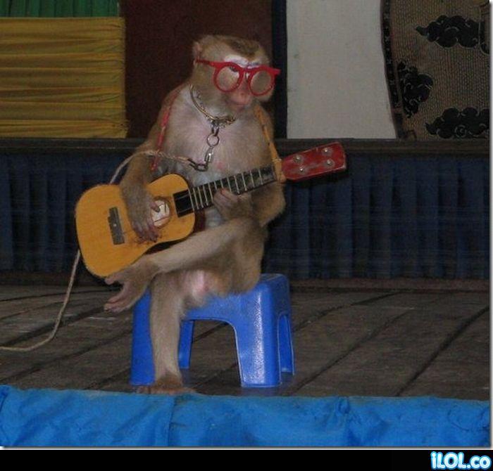 mono-guitarrista