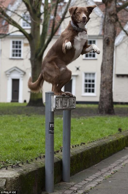 perro-famoso-2