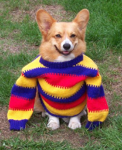 perro-sueter