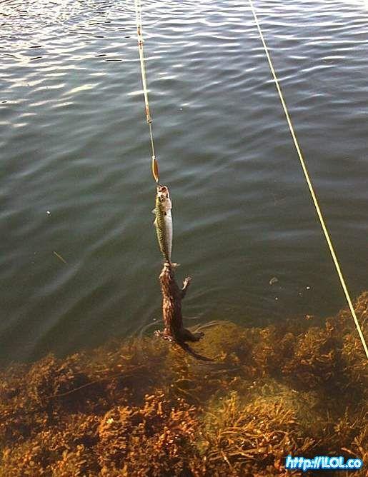 pesca-nutria