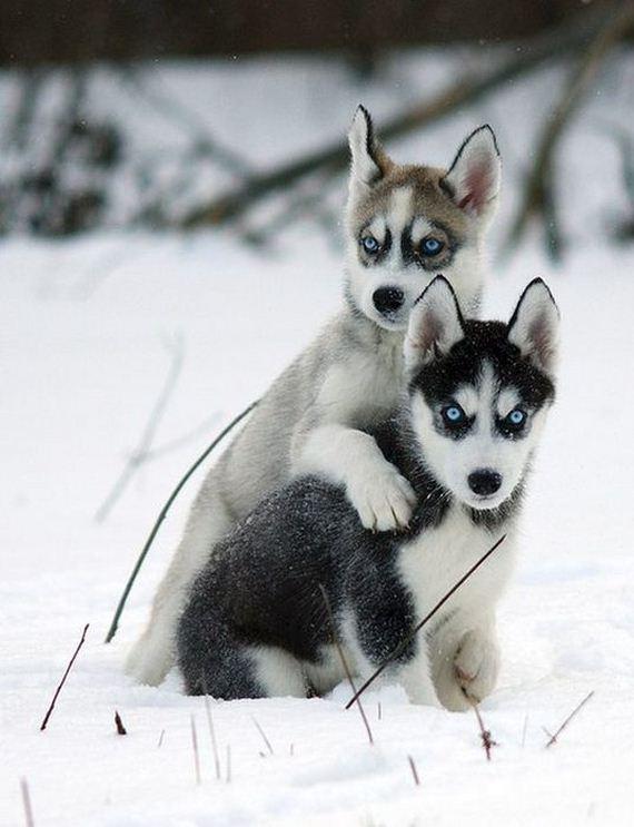 fotos-perros-naturaleza-03