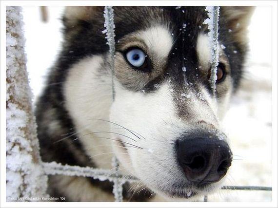 fotos-perros-naturaleza-10