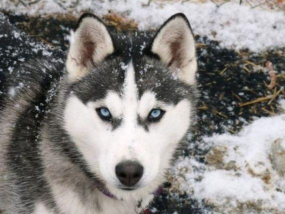 fotos-perros-naturaleza-11