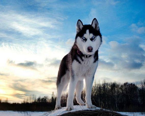 fotos-perros-naturaleza-13
