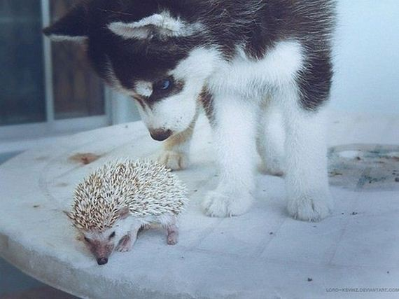 fotos-perros-naturaleza-15