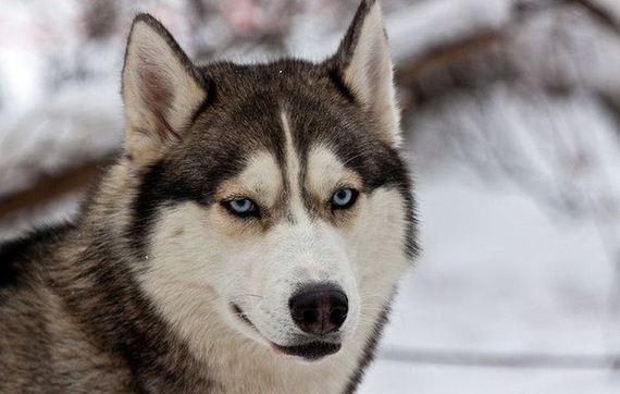 fotos-perros-naturaleza-16