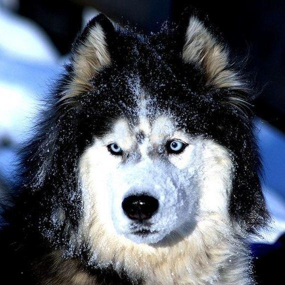 fotos-perros-naturaleza-19